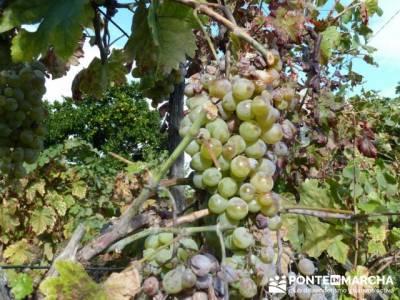 Parque Natural Naturtejo, excursiones de senderismo; fruto del tejo; sitios visitar madrid